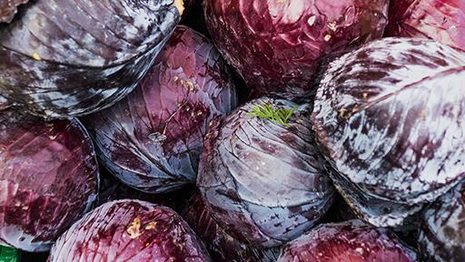 Rødkålsfabrik Viser Vejen For Fødevareproducenter Med Procesenergi